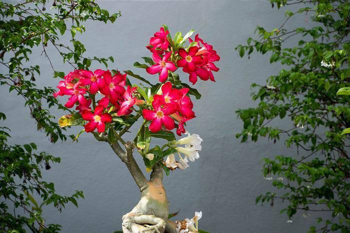 7 loại hoa phong thủy mang tài lộc, phúc khí trong năm Tân Sửu 2021 - 3