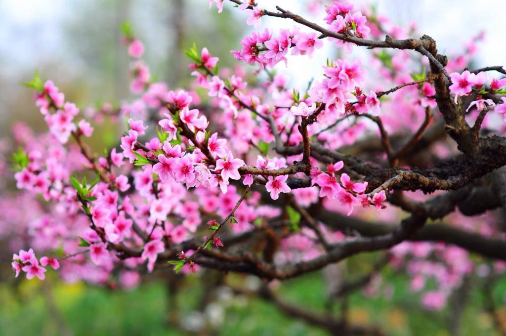 7 loại hoa phong thủy mang tài lộc, phúc khí trong năm Tân Sửu 2021 - 8
