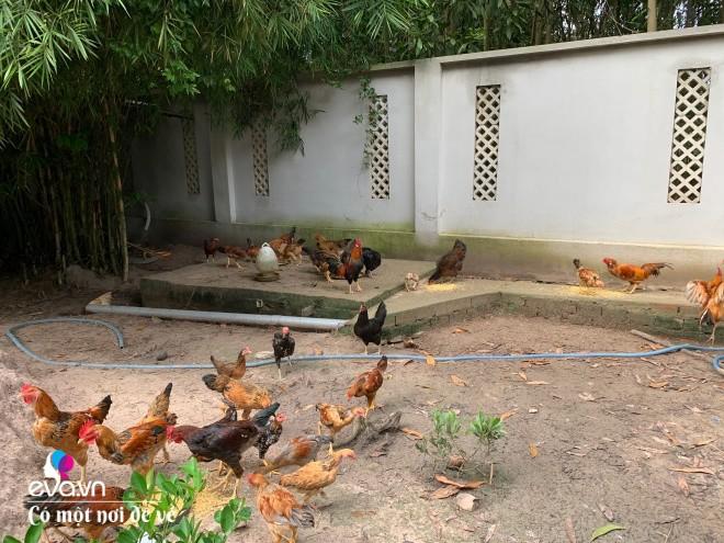 9X bỏ Sài Gòn về ở nơi không có điện, xây nhà 2 tỷ sống cuộc đời an yên - 22