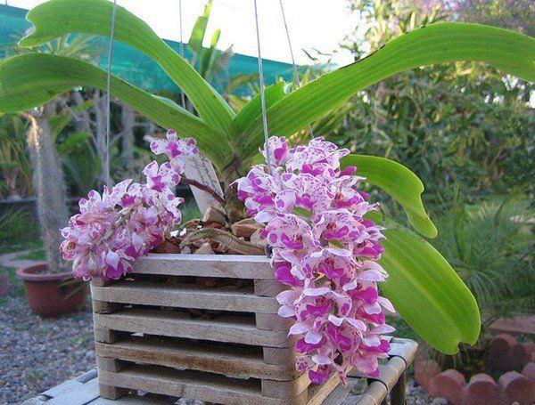 Những lưu ý khi chơi để hoa lan tươi cả tháng: Đừng dại tưới nhiều nước - 3
