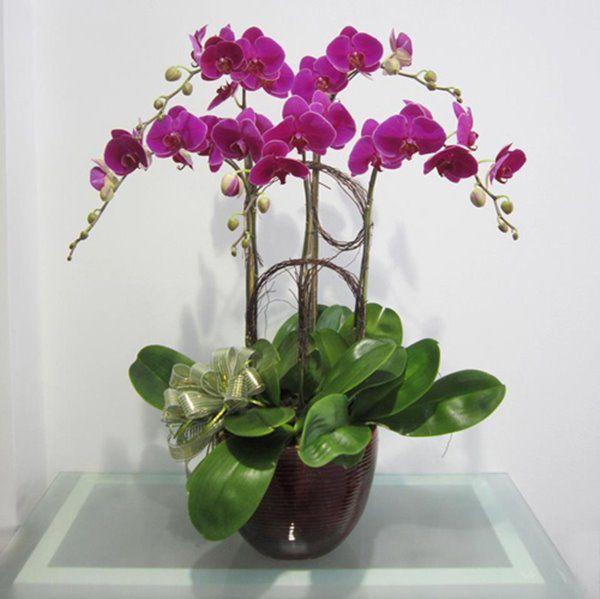 Những lưu ý khi chơi để hoa lan tươi cả tháng: Đừng dại tưới nhiều nước - 4