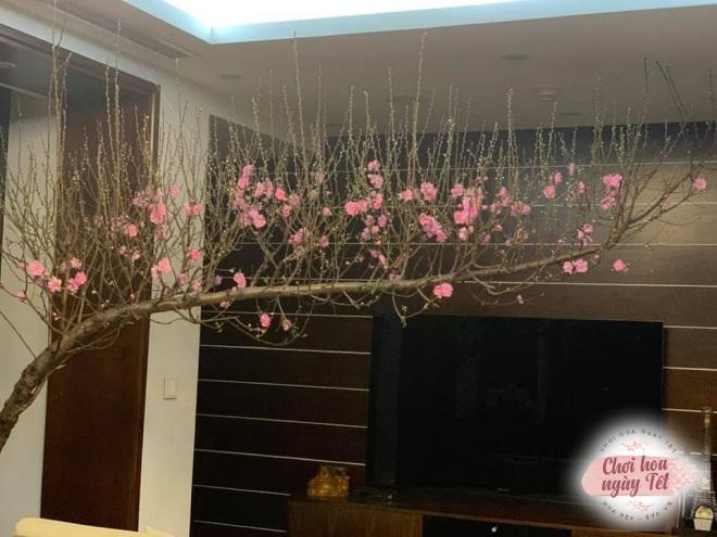 """Chỉ một dây thép, mẹ Hà Nội tiết lộ cách dựng cành đào Tết to cỡ nào cũng """"cân tất"""" - 9"""