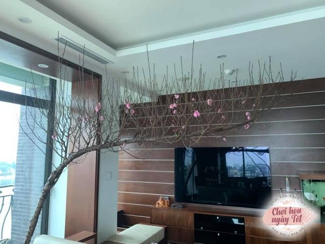 """Chỉ một dây thép, mẹ Hà Nội tiết lộ cách dựng cành đào Tết to cỡ nào cũng """"cân tất"""" - 11"""