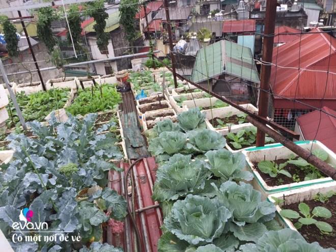 Giữa lòng thủ đô, thanh niên làm vườn ao chuồng, thu về cả tạ cá, cà chua, su hào...đủ loại - 8