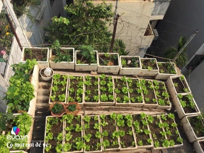 Giữa lòng thủ đô, thanh niên làm vườn ao chuồng, thu về cả tạ cá, cà chua, su hào...đủ loại - 7