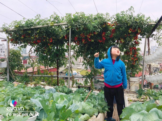 Giữa lòng thủ đô, thanh niên làm vườn ao chuồng, thu về cả tạ cá, cà chua, su hào...đủ loại - 23