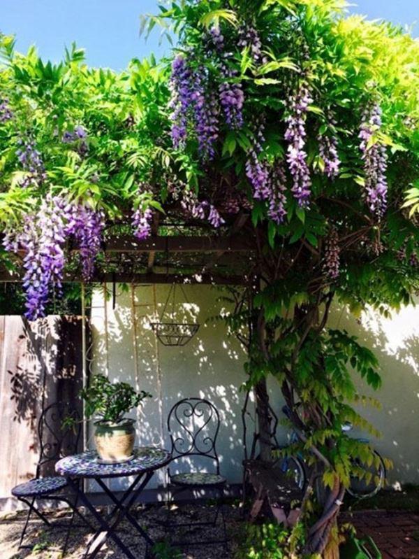 Bên trong biệt thự của Thúy Nga ở Mỹ, có 112 ô cửa, hoa cỏ ngập lối đi - 12