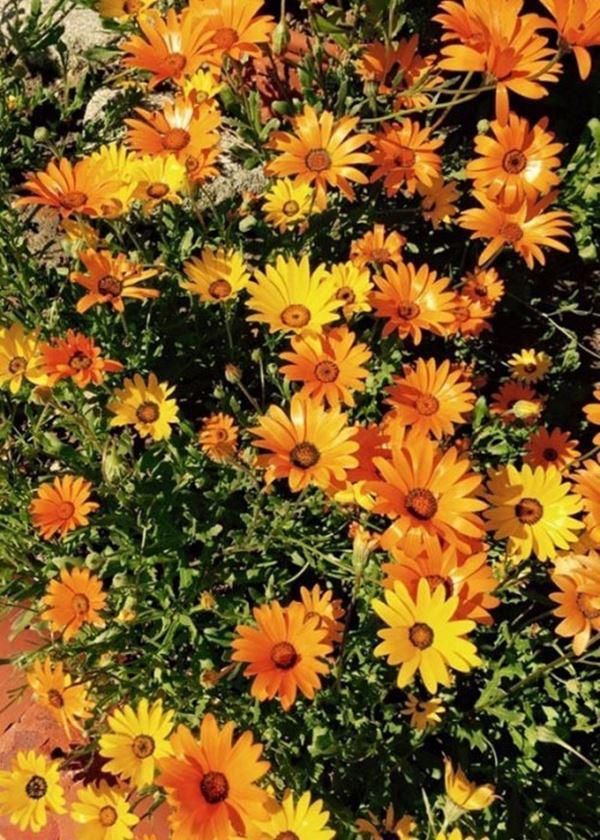 Bên trong biệt thự của Thúy Nga ở Mỹ, có 112 ô cửa, hoa cỏ ngập lối đi - 11