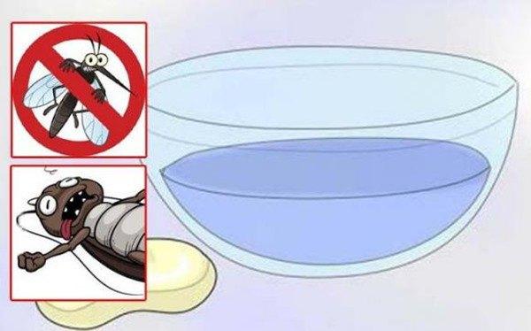 """Trời nồm ẩm muỗi càng nhiều, đặt một bát nước trong phòng, muỗi sẽ không còn cơ hội """"amp;#39;vo ve"""" - 4"""