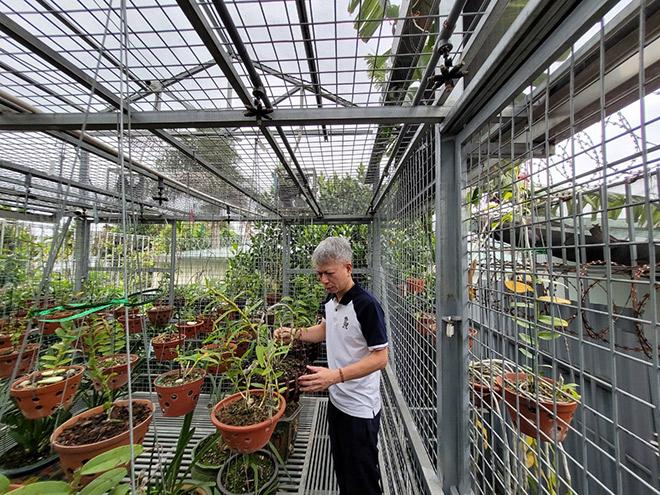 Nguyễn Hữu Hiệp và cơ duyên với hoa phong lan - 3