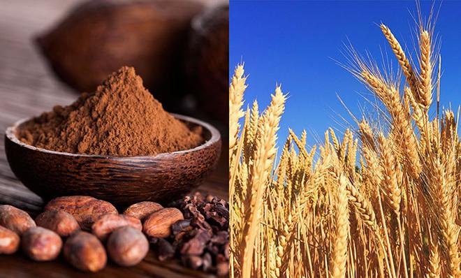 Sữa lúa mạch thạch ca cao – Cực phẩm hút hồn trẻ nhỏ - 1