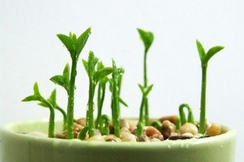 Tận dụng đồ thừa trong bếp mang đi trồng, thành quả đảm bảo khiến bạn bất ngờ - 9
