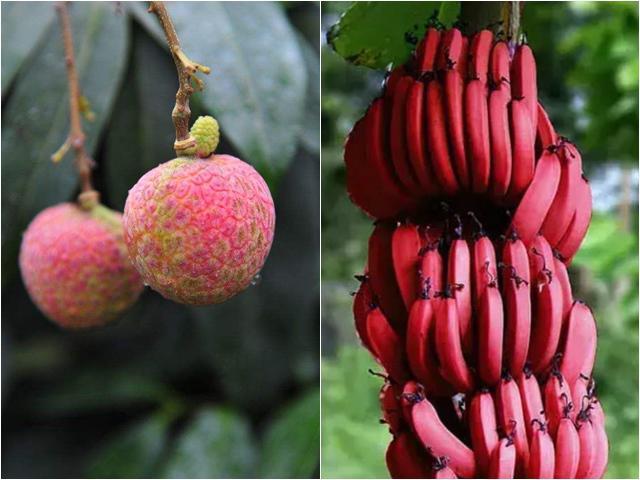 4 loại quả quý hiếm trên thế giới, có tiền chưa chắc đã được ăn