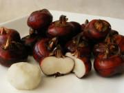 Cây tía tô: Đặc điểm, tác dụng và cách trồng tại nhà