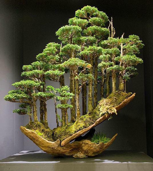 Cây bonsai và các dáng dây có ý nghĩa phong thủy tài lộc - 11