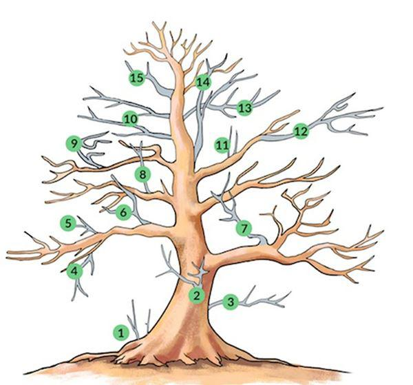 Cây bonsai và các dáng dây có ý nghĩa phong thủy tài lộc - 13