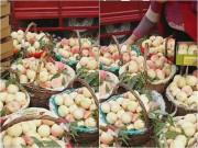 """Cách trồng loại rau """"đỏ"""" nấu canh ngày hè, nhà ăn không hết phải mang cho"""