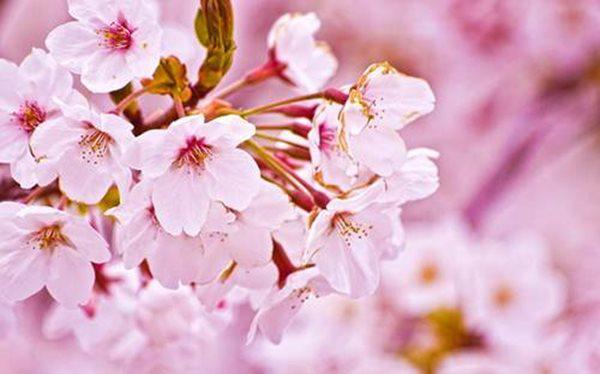 10 loài hoa đẹp nhất thế giới, số 8 ở Việt Nam mọc đầy, vài chục nghìn 1 bó to - 1