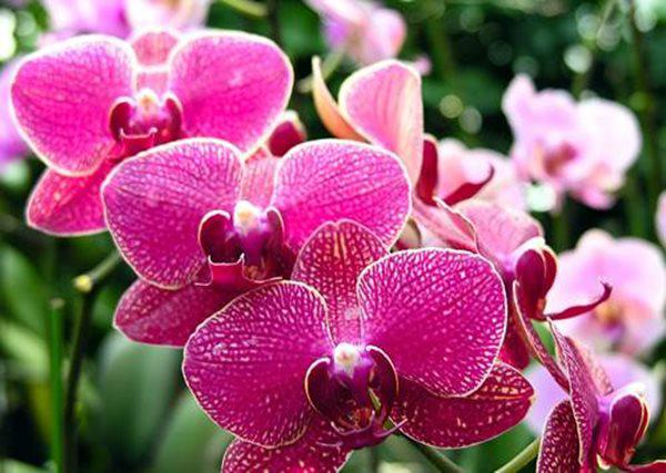 10 loài hoa đẹp nhất thế giới, số 8 ở Việt Nam mọc đầy, vài chục nghìn 1 bó to - 4