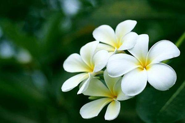 10 loài hoa đẹp nhất thế giới, số 8 ở Việt Nam mọc đầy, vài chục nghìn 1 bó to - 7