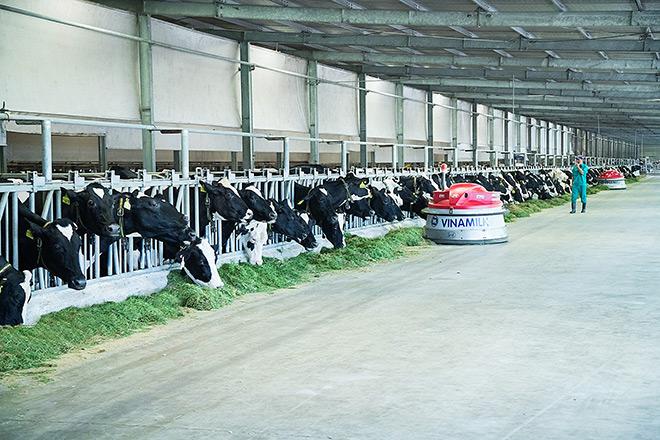 Dấu ấn mang tên Vinamilk trong phát triển ngành chăn nuôi bò sữa công nghệ cao Việt Nam - 2