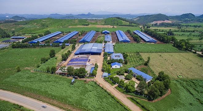 Dấu ấn mang tên Vinamilk trong phát triển ngành chăn nuôi bò sữa công nghệ cao Việt Nam