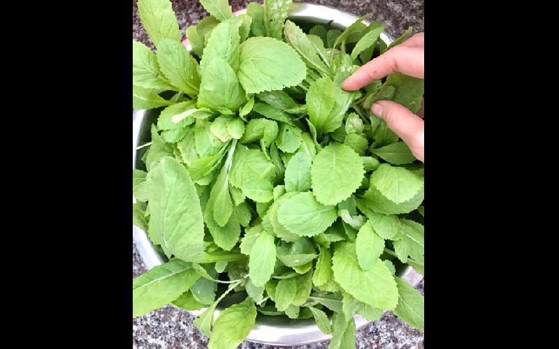 Với kinh nghiệm hơn hai năm làm vườn, chị đảm bảo bữa ăn gia đình luôn có đủ rau sạch cần thiết dù mỗi loại chỉ trồng một ít.