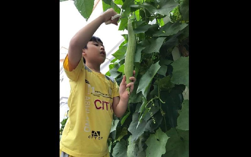 Bận rộn với lịch trình công việc và chăm con nhỏ nhưng nữ diễn viên vẫn cố gắng ra thăm vườn mỗi ngày và tự tay tưới nước, tỉa lá.