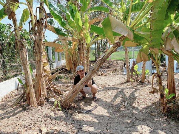Showbiz đóng băng, Minh Luân bỏ phố về quê cải tạo nhà vườn rộng 3.000m2 - 3