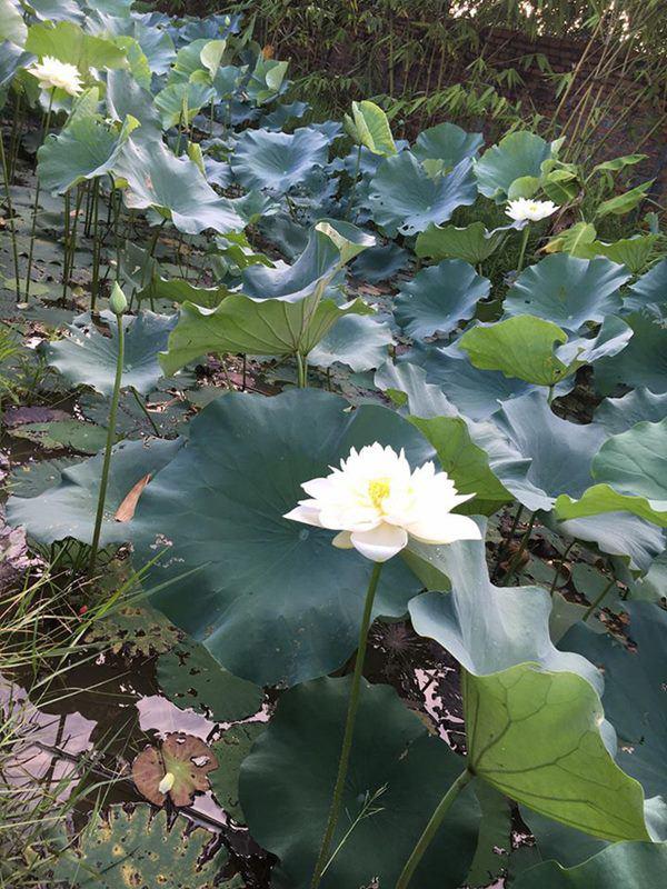 Nghệ sĩ Giang Còi về quê ở nhà vườn 10.000m2 ngập rau trái, sáng ra hái mang đi cho - Ảnh 8.