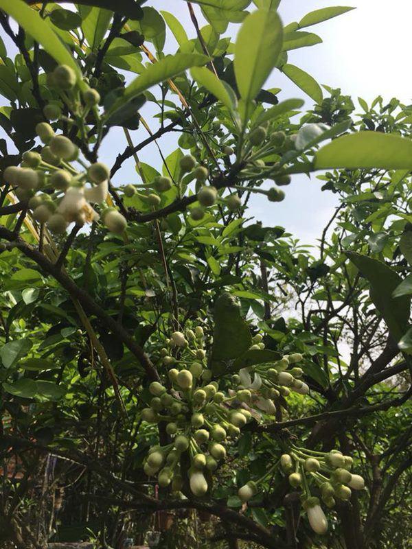 Nghệ sĩ Giang Còi về quê ở nhà vườn 10.000m2 ngập rau trái, sáng ra hái mang đi cho - Ảnh 3.