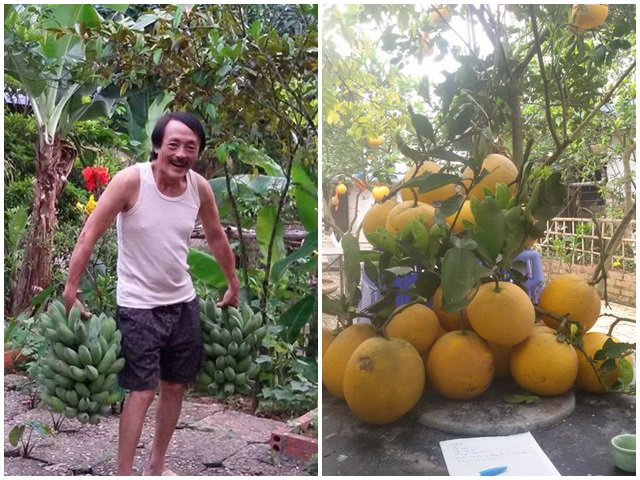 Nghệ sĩ Giang Còi về quê ở nhà vườn 10.000m2 ngập rau trái, sáng ra hái mang đi cho