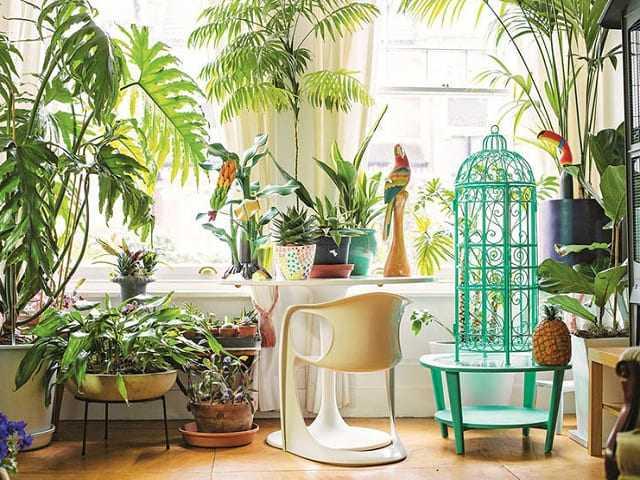 7 loại cây trồng trong nhà không cần ánh sáng mà vẫn khỏe mạnh, tươi tốt