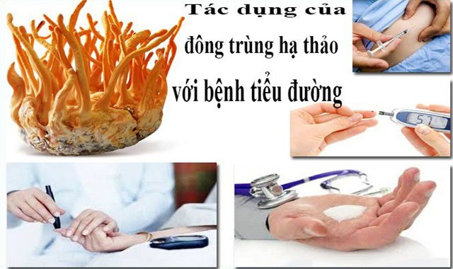 8 tac dung cua dong trung ha thao voi suc khoe - 9