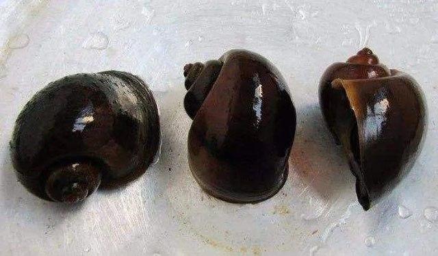 6 mon an chua nhieu ky sinh trung nhat, trong do loai dau tien chua den 6000 con - 1