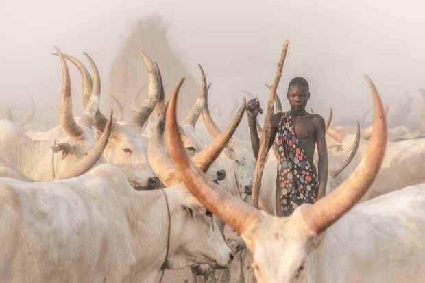 Bộ lạc dùng nước tiểu và phân bò để tắm gội nhưng nhất quyết không ăn thịt bò