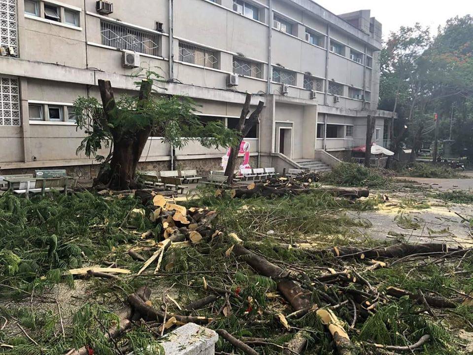 Sau vụ cây phượng đổ đè học sinh, một trường