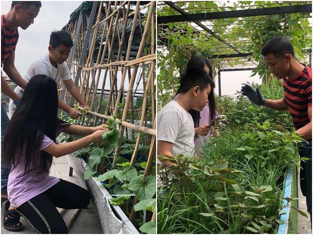 Bố Sài Gòn biến sân thượng thành vườn rau, ăn không hết phải nài nỉ hàng xóm sang lấy về - 22