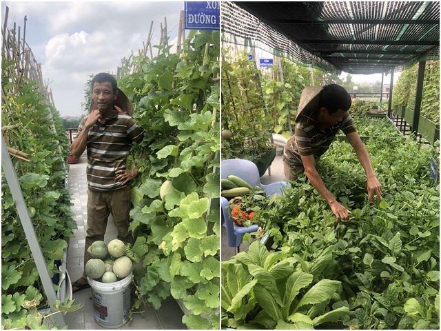 Bố Sài Gòn biến sân thượng thành vườn rau, ăn không hết phải nài nỉ hàng xóm sang lấy về - 19