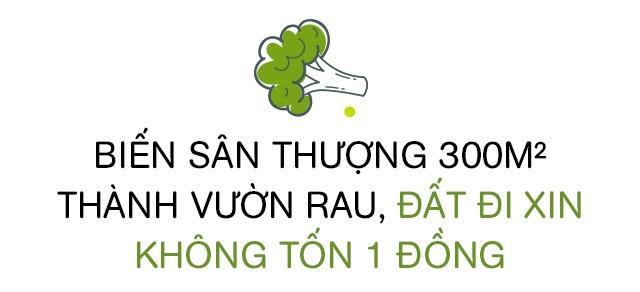 Bố Sài Gòn biến sân thượng thành vườn rau, ăn không hết phải nài nỉ hàng xóm sang lấy về - 4