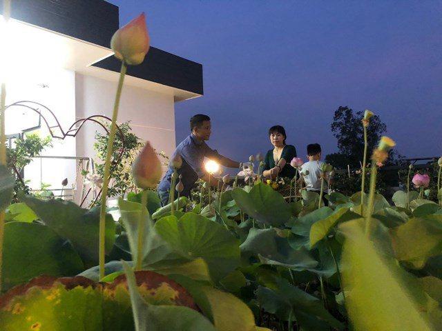 Bố Sài Gòn biến sân thượng thành vườn rau, ăn không hết phải nài nỉ hàng xóm sang lấy về - 20