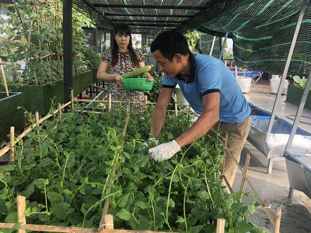 Bố Sài Gòn biến sân thượng thành vườn rau, ăn không hết phải nài nỉ hàng xóm sang lấy về - 21