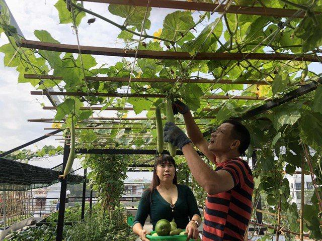 Bố Sài Gòn biến sân thượng thành vườn rau, ăn không hết phải nài nỉ hàng xóm sang lấy về - 16
