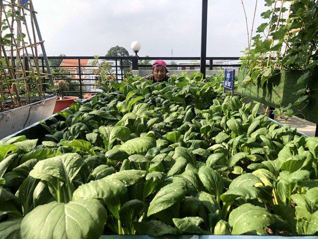 Bố Sài Gòn biến sân thượng thành vườn rau, ăn không hết phải nài nỉ hàng xóm sang lấy về - 13