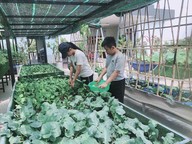 Bố Sài Gòn biến sân thượng thành vườn rau, ăn không hết phải nài nỉ hàng xóm sang lấy về - 24