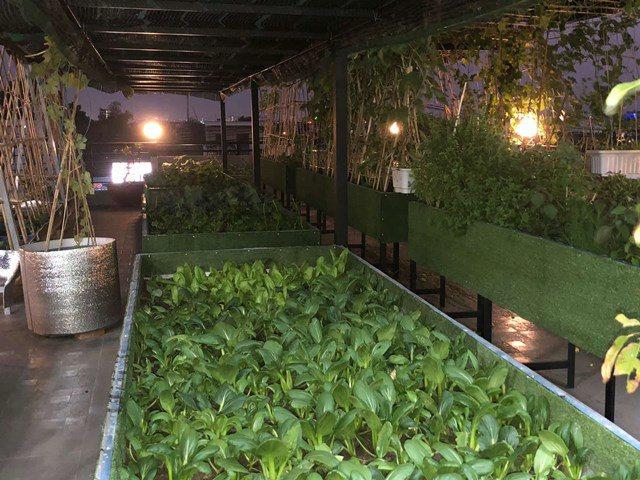 Bố Sài Gòn biến sân thượng thành vườn rau, ăn không hết phải nài nỉ hàng xóm sang lấy về - 18