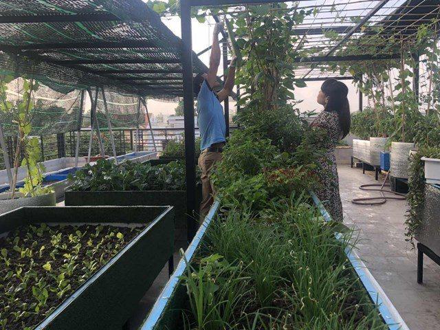 Bố Sài Gòn biến sân thượng thành vườn rau, ăn không hết phải nài nỉ hàng xóm sang lấy về - 6