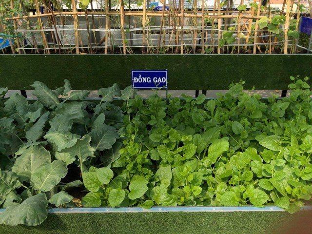 Bố Sài Gòn biến sân thượng thành vườn rau, ăn không hết phải nài nỉ hàng xóm sang lấy về - 3