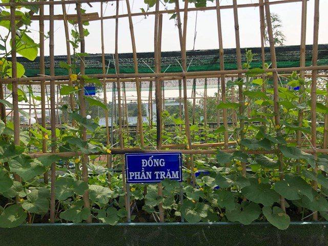 Bố Sài Gòn biến sân thượng thành vườn rau, ăn không hết phải nài nỉ hàng xóm sang lấy về - 26