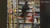 Khách hàng đứng hình nhìn kì đà khổng lồ bò vào siêu thị